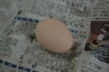 $蔵元駄文-卵